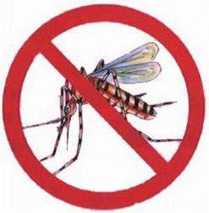 dengue-294x300